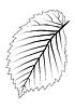 Векторный клипарт: контур листа дерева