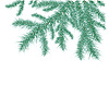 Vector clipart: spruce branches