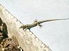 懒洋洋地躺在公园晒太阳的蜥蜴 | 免版税照片