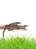 蜥蜴在树 | 免版税照片