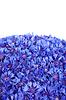 Фото 300 DPI: Красивые весенние цветы василька синего на