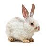 White small rabbit | Stock Foto