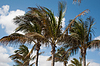 ID 3379404 | Palm trees | High resolution stock photo | CLIPARTO