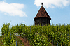 Photo 300 DPI: Vineyard with Melac Tower in Obertürkheim