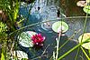 백합 꽃과 해외 문화 홍보원과 정원 연못 | Stock Foto