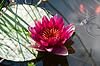 백합 꽃과 해외 문화 홍보원 | Stock Foto