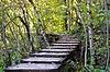 Boardwalk in forest, autumn   Stock Foto