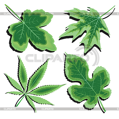 Green leaves collection | Stock Vector Graphics |ID 3003907
