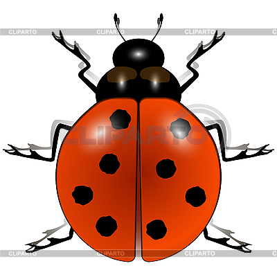 Ladybug against white | Stock Vector Graphics |ID 3029213