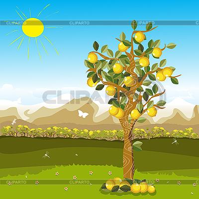 柠檬 | 向量插图 |ID 3011144