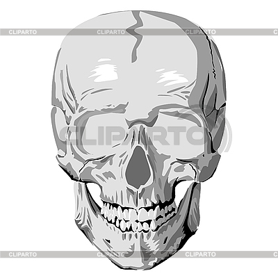 Human skull | Stock Vector Graphics |ID 3016631