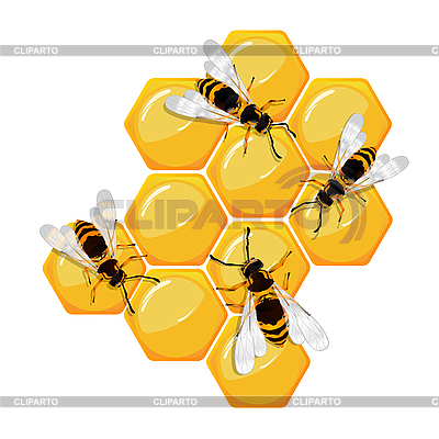 Bees on honeycomb | Stock Vector Graphics |ID 3018671