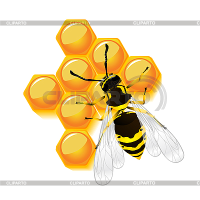 Wasp and honeycomb | Stock Vector Graphics |ID 3038479