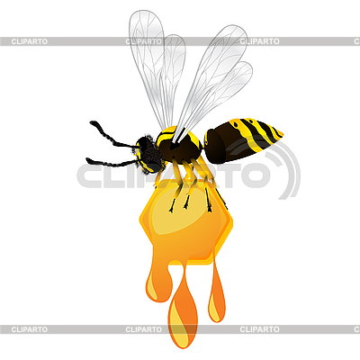 Wasp and honey | Stock Vector Graphics |ID 3039051