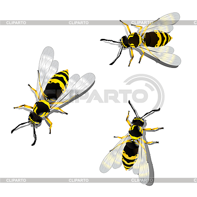 Three wasps | Stock Vector Graphics |ID 3089330