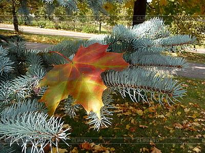 Żółty liść | Foto stockowe wysokiej rozdzielczości |ID 3010715