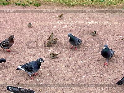 Miejskie ptaki | Foto stockowe wysokiej rozdzielczości |ID 3010940