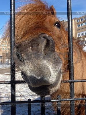 Конь | Фото большого размера |ID 3011001