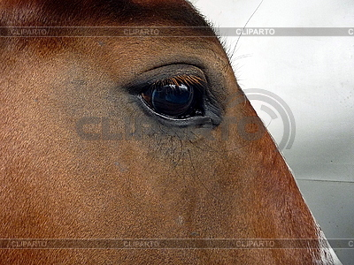 Eye of the horse | High resolution stock photo |ID 3011002