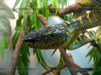 Wściekły Wąż | Foto stockowe wysokiej rozdzielczości |ID 3011026