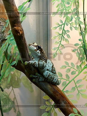 Frosch auf Zweig | Foto mit hoher Auflösung |ID 3011029