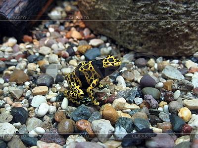 Gelber und schwarzer Frosch | Foto mit hoher Auflösung |ID 3011032