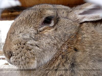 큰 토끼 | 높은 해상도 사진 |ID 3011055