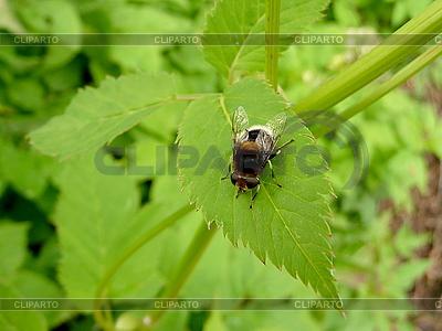Farbige Fliege auf Blatt | Foto mit hoher Auflösung |ID 3011840