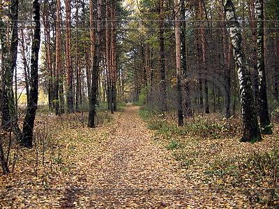 Herbstwald | Foto mit hoher Auflösung |ID 3011909