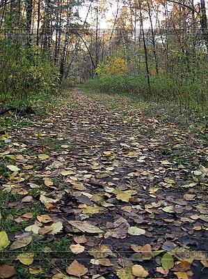 가을 숲 | 높은 해상도 사진 |ID 3011948
