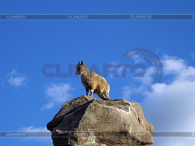 Goat on stone | High resolution stock photo |ID 3011955
