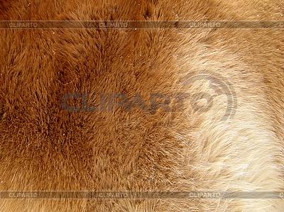 Orangefarbenes Pelz | Foto mit hoher Auflösung |ID 3011981