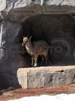 Małe kozy | Foto stockowe wysokiej rozdzielczości |ID 3012005