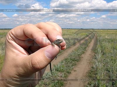 Lizard in the hand | Foto stockowe wysokiej rozdzielczości |ID 3012163