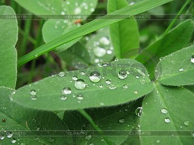 Wassertropfen  | Foto mit hoher Auflösung |ID 3012340