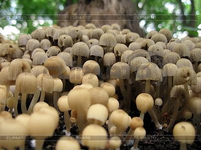 버섯 | 높은 해상도 사진 |ID 3012354