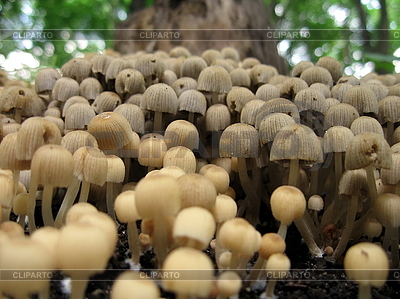 Pilze | Foto mit hoher Auflösung |ID 3012354