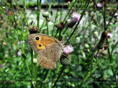 Schmetterling mit Flecken auf den Flügeln | Foto mit hoher Auflösung |ID 3012483