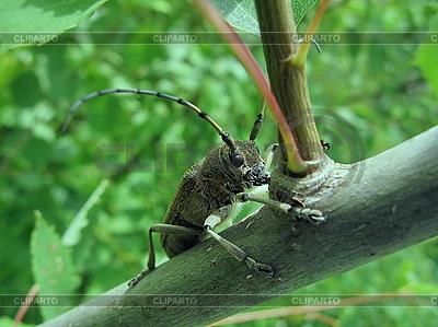 Käfer auf Baum | Foto mit hoher Auflösung |ID 3012494