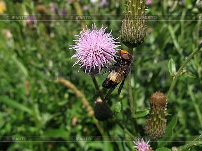 Fliege auf Blume   Foto mit hoher Auflösung  ID 3012505