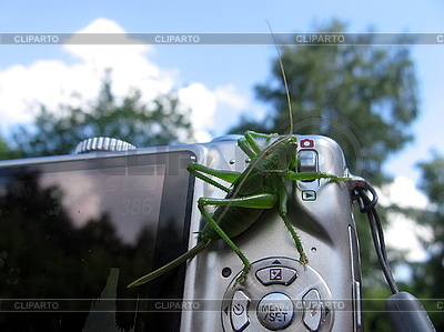 Grüne Heuschrecke vor der Kamera   Foto mit hoher Auflösung  ID 3012513