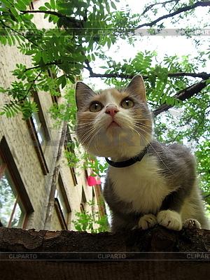 Curious kitten | High resolution stock photo |ID 3012524