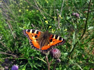 Orangefarbener Schmetterling auf Blume | Foto mit hoher Auflösung |ID 3012550