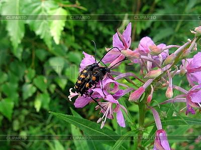 Parę chrząszczy | Foto stockowe wysokiej rozdzielczości |ID 3012561