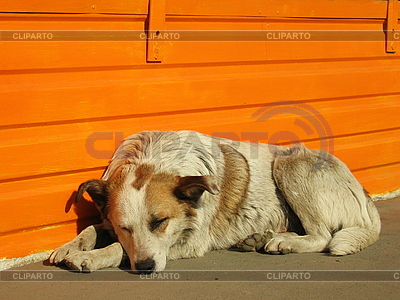 Sleeping dog | High resolution stock photo |ID 3012586