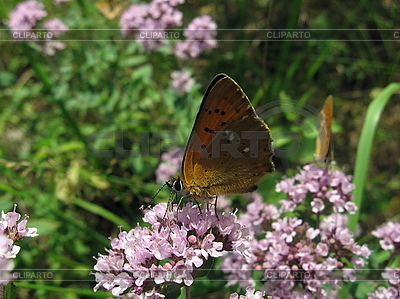 Mały motyl | Foto stockowe wysokiej rozdzielczości |ID 3012597