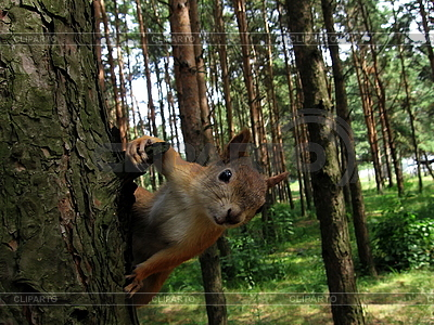 Squirrel on the tree   High resolution stock photo  ID 3012604