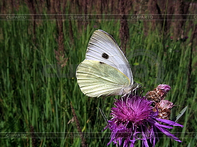 White butterfly   High resolution stock photo  ID 3012625
