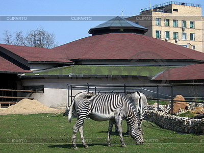 Zebra in zoo | High resolution stock photo |ID 3012637
