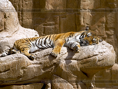 Tygrys | Foto stockowe wysokiej rozdzielczości |ID 3012759